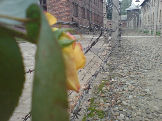 Leaf growing in Auschwitz I Nazi concentration camp
